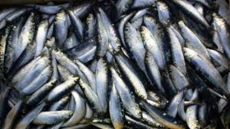 الكشف عن أسباب نفوق الأسماك بسواحل صيّادة