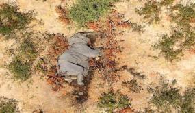 كارثة غامضة.. نفوق مئات الأفيال في بتسوانا حول آبار المياه (صور مؤلمة)
