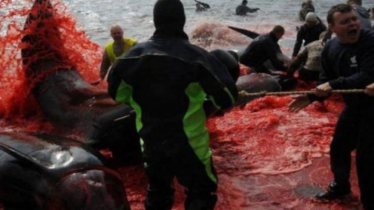 مذبحة في البحر…