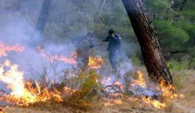 تونس تشهد اندلاع 42 حريقا في 10 ولايات
