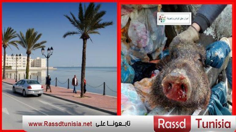 البحيرة 2 / إكتشاف مطعم يطهو بلحم الخنازير للمواطنين دون علمهم !!! (صور)