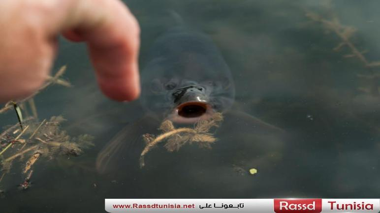ظهور سمكة غريبة لها وجه كوجه الإنسان