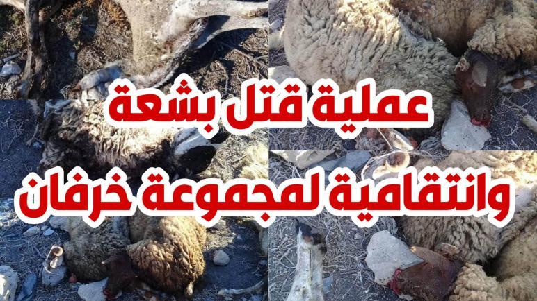 مشهد صادم جديد في أرياف تونس : عملية قتل بشعة وانتقامية لمجموعة من الخرفان وهذه التفاصيل