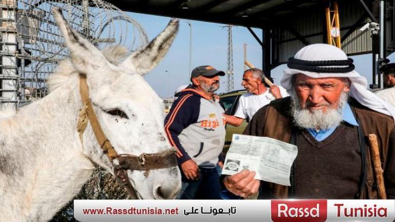 النفط الأخضر… الاستيطان يهدد زيتون فلسطين