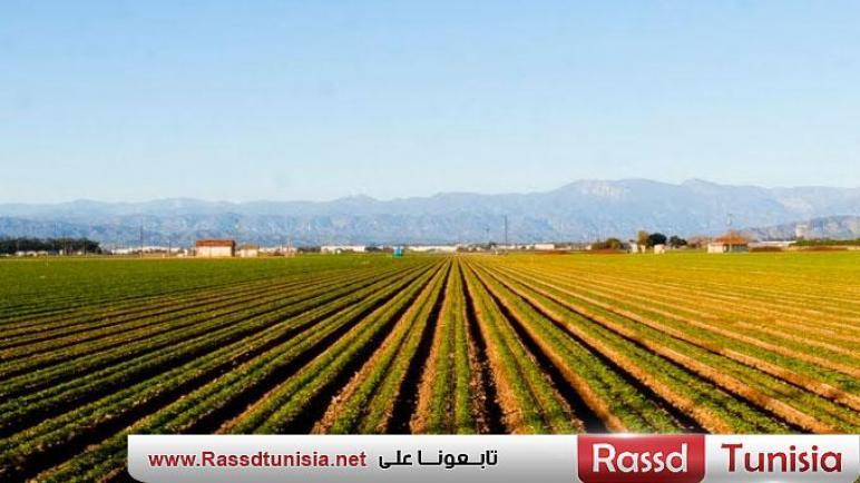 منوبة : برمجة بذر مساحة زراعات كبرى تقدر بــ54650 هك منها 37 الف هك للحبوب